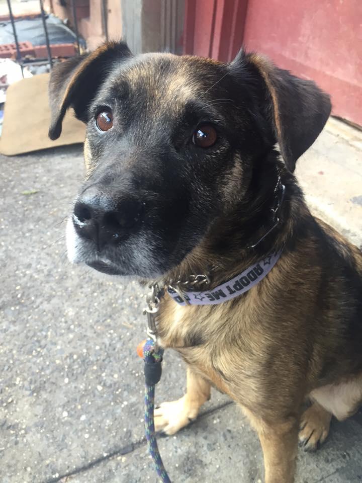 Dog Adoption Westchester Ny