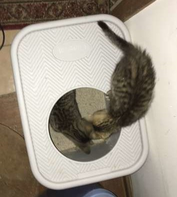 Litter Box & Litter Review: What works for me